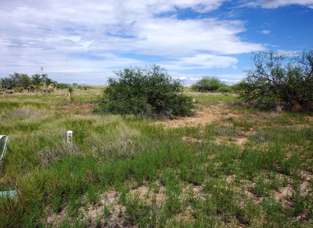 200 View to SE level  2,67 acres horse lot